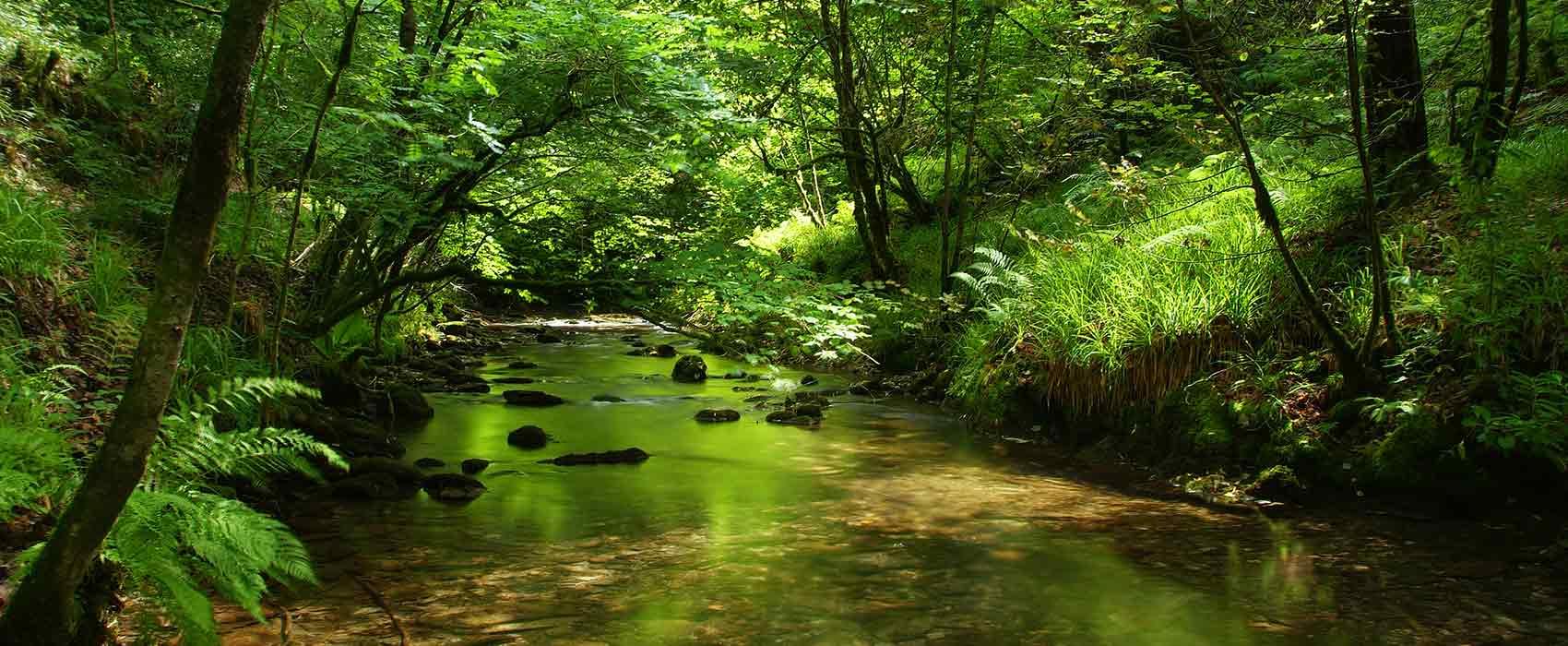 Devon river in wooded area